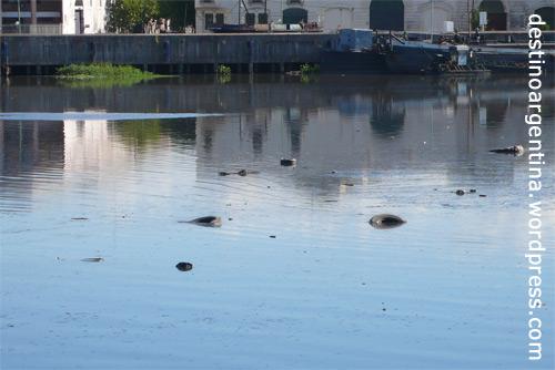 Umweltverschmutzung in La Boca Buenos Aires