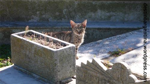 Kleine Katze auf dem Cementerio Central in Montevideo