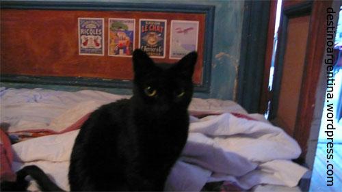Die schwarze Katze in der Casa Peru