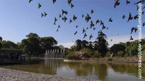 Taubenplage im Parque del Cntenario in Caballito, Buenos Aires